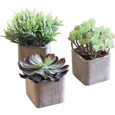 Dot & Bo Desert Flora Potted Plants - Set of 3 ($41) ❤ liked on Polyvore featuring home, home decor, floral decor, fillers, plants, floral pots, floral home decor, succulent pot and square pots