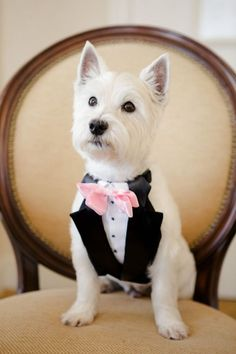 16 Super Cute Dog Wedding Photos that will make you invite your pet Dog Wedding, On Your Wedding Day, Wedding Ceremony, Ballroom Wedding, Westies, Cute Dogs, Funny Dogs, Dogs And Puppies, Doggies