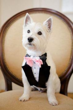 unique wedding ideas -dog in black and white tuxedos
