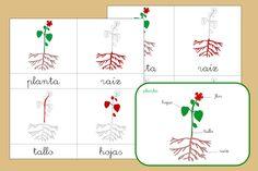 cartas tres partes planta Montessori Materials, Botany, Cards, Biology, Aurora, Space, Oral Hygiene, Plant Parts, School Gardens