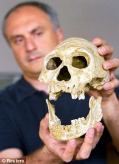 David Lordkipanidze of the Georgian Academy of Sciences holds a 1.75-million-year-old skull, excavated in Dmanisi in 2001. The bones of an early human with a small head suggest larger brains associated with modern humans did not necessarily evolve before our ancestors began migrating