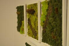 #moss #licheni #cadou #tablou