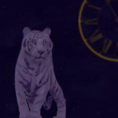 Fantasy #draw #digital painting #time #galaxy #tiger