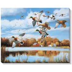 Mallards In Flight Wrapped Canvas Art - American Expedition