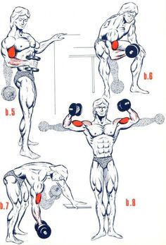 Fitness Illustration Description Biceps1 Plus – Read More –