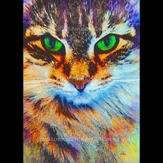 Emerald Gaze - Art by John Robert Beck.  This cat art was created 2007. The art piece is the artist's best selling art piece. The subject is a Norwegian Forest Cat. There are retangular versions and square versions. Starting at $3.00