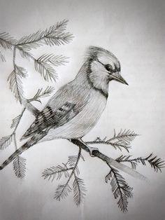 Птица карандашом