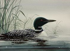 Loon Near The Shore by James Williamson (watercolor)