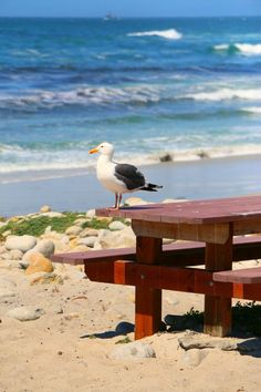 #travel Carmel By The Sea Vacation Guide - Where to Eat