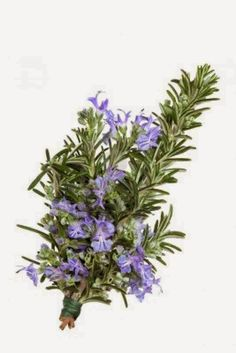 Lady Linda ♡: First Friday Tasha Tudor Book Review....Rosemary for Remembrance