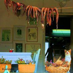 """"""" Στην ακρογιαλιά στο Κίνι  σε ένα ψαροκαφενέ  η καρδιά μου έχει μείνει  αμανάτι μα το ναι  Με μη φραγκο Συριανέ  με τον ψαροκαφενέ  πιάσε ούζο και χταπόδι  να τα πιούμε ρεφενέ  """"  Colours of Greece"""