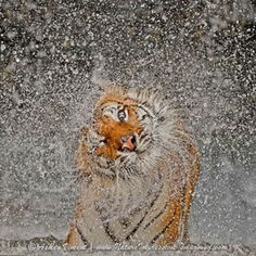 The Explosion by Ashley Vincent- 2012 Nat Geo Photo Contest Grand Prize Winner