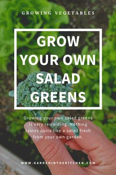 Are you a beginning gardener? Would you like to grow your own food easily at home? Here are some garden ideas on growing your own salad greens. Nothing tastes quite like a salad fresh from your own garden. #gardenideas #gardening #herbs #vegetables #howtogrowlettuce #howtogrowkale #howtogrowgreenonions Growing Lettuce, Growing Tomatoes, Growing Vegetables, May Garden, Garden Posts, Garden Guide, Garden Ideas, Allium Flowers, Wire Trellis