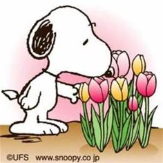 snoopy flowers - Yahoo Image Search Results