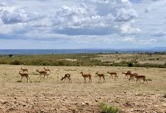 Experience wildlife while interacting and observing them of how they contributed in maintaining balance in our ecosystem. Timon And Pumbaa, Simba And Nala, Kenya Africa, Dark Night, Business Travel, Safari, Wildlife, Tours, Timon & Pumbaa