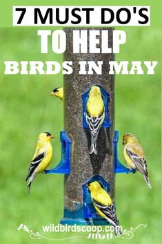 Use the 7 Must Do's To Help Backyard Birds In May from the Bird Watching Guide Series, lead you into successfully feeding birds in spring. Feeding Birds, Bird Feeding Station, Bird Identification, Spring Birds, Backyard Birds, Wild Birds, Bird Watching, Beautiful Birds, Animal Shelter