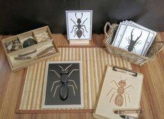 Loose Parts Insect / Bug Exploration, Build a Bug, Fine Motor Skills, Gift for Kids, Montessori Classroom, Reggio Emilia, Teacher Resources
