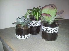 plant in potjes