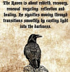 The Characteristics of the Raven as a Spirit Animal – Witches Of The Craft® – Norse Mythology-Vikings-Tattoo Animal Meanings, Animal Symbolism, Viking Quotes, Animal Spirit Guides, Raven Spirit Animal, Raven Art, The Raven, Norse Pagan, Warrior Quotes