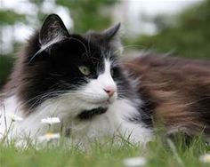 cats - - Yahoo Image Search Results