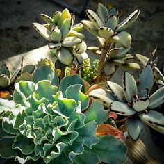 Mother #nature in a box #plants #succulents #California #winter