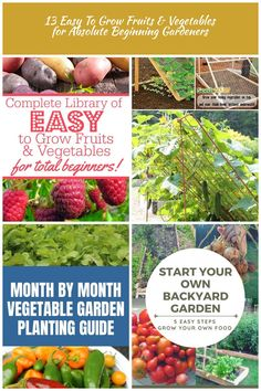 Ready to start your first vegetable garden? You cannot miss our list of the EASY to grow fruits and vegetables for absolute beginning gardeners! Backyard Garden Vegetable 13 Easy To Grow Fruits & Vegetables for Absolute Beginning Gardeners