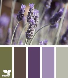 lavender tones -- I know this has color palettes that most would use for a home but this helps me see colors for the wedding... I really like the two lavender tones (would be nice for dresses)