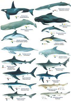 Middellandse zeedieren kaart 1