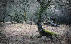 https://flic.kr/p/SLsWKR | Orchard | Orchard