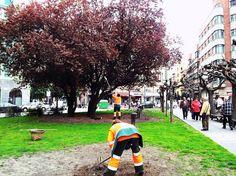 Con la llegada de la primavera comienzan los cuidados especiales de las zonas verdes. En la foto, dos operarios trabajando en los jardines de la plazuela San Miguel.