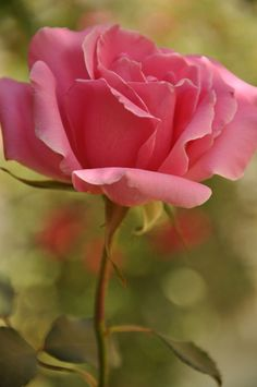 Fulvia Afre Gannaway is creative nature photographer. She says beautiful flowers make us feel good. They help us celebrate specia...
