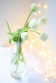 White tulips in glass vase ❥ White Tulips, White Flowers, Ikebana, White Springs, Deco Floral, Shades Of White, Background Pictures, Flower Arrangements, Beautiful Flowers