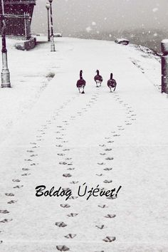 Animals playing in winter snow. This photo gallery has some very rare and cute pictures on winter animals. The fact is that snow is something that looks pure and beautiful on its own and on the other Beautiful Birds, Animals Beautiful, Cute Animals, Wild Animals, Funny Animals, Funny Birds, Nature Animals, Baby Animals, Winter Szenen