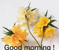 Pretty Good Morning Image Quote With Flowers