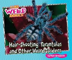 Read how tarantulas defend themselves with their own spikey hairs. Did you know that there's a type of spider that looks like bird droppings? Learn all about weird spiders in this great addition to the I LIKE WEIRD ANIMALS! series. Stunning full-color photographs and easy text make this science reader a great choice for any elementary library.