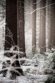 Haunting Forest, r3novatio