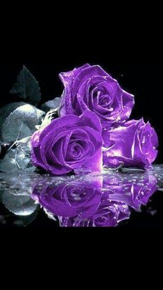 #purple #roses #reflection #photography #art