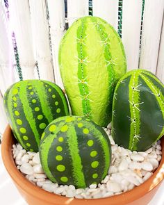 Stone Cactus, Watermelon, Fruit, Plants