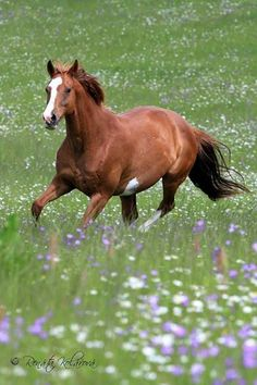 Lady, paint mare. Horsephotos - Renáta Kolářová