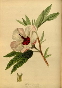 """https://flic.kr/p/dEZLVc 