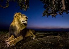 Auf Nacht-Safari im afrikanischen Busch Serval, Caracal Caracal, Siena, National Geographic, Jaguar, Rhino Africa, Safari, Canadian Forest, Dawn And Dusk