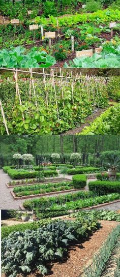 Incomparable Vegetable Gardening Tips At Your Backyard Ideas. Impressive Vegetable Gardening Tips At Your Backyard Ideas. Vegetable Garden Planner, Raised Vegetable Gardens, Vegetable Garden For Beginners, Starting A Vegetable Garden, Vegetable Garden Design, Gardening For Beginners, Vegetable Gardening, Flower Gardening, Veggie Gardens