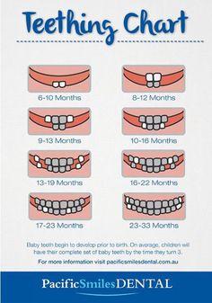 Baby teeth diagram Baby teeth chart - Baby Development Tips Baby Trivia, Baby Teething Chart, Tooth Chart, Baby Life Hacks, Baby Information, Shower Bebe, Baby Kind, Baby Baby, Baby Crib