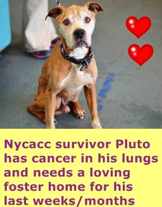 This is how I met you PLUTO❤️ I'll never forget what you did to my heart the moment I first saw you❤️ Your wonderful eyes talked straight to me - I was in love - I couldn't forget you❤️ Animal Shelter, Animal Rescue, Stop Animal Cruelty, First Love, My Love, Pet Loss, 9 Year Olds, Animals Of The World, Pet Adoption