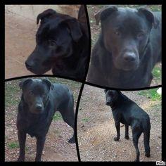 BOUBA Type : Labrador Sexe : Mâle Age : Adulte Couleur : Noir Taille : Grand Lieu : Nord - 59 (Nord-Pas-de-Calais) Refuge : Trésor de vies (Nord) Je suis un gentil chien né en 2013 actuellement en famille d'accueil avec mon copain Haribo.