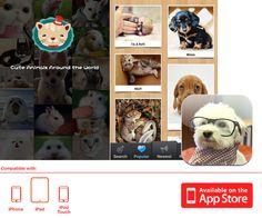 Cutest Paw - App