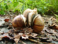 snails by vickytje on deviantART