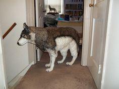 Life sized wolf plush toy! by WolvesSasukeNeji