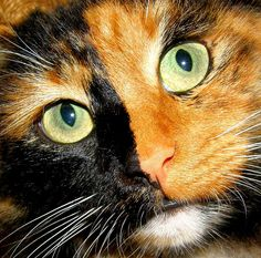 Eagleeye,(me)tom,mate to Moonblaze,black and orange tortoiseshell with light green eyes,cunning,strong,brave,courgeous,kind,wise,patient,determined,loyal,swift as the wind,humble and can understand anyone.