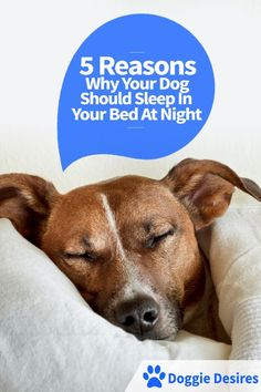 5 reasons why your dog should sleep in your bed at night >> http://doggiedesires.com/why-your-dog-should-sleep-in-your-bed/